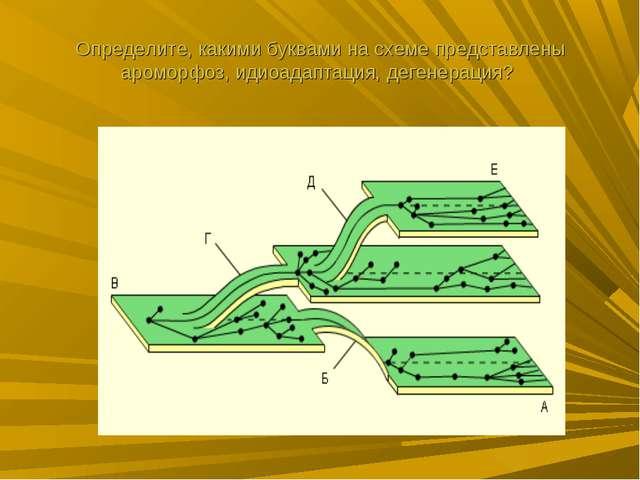 Определите, какими буквами на схеме представлены ароморфоз, идиоадаптация, де...