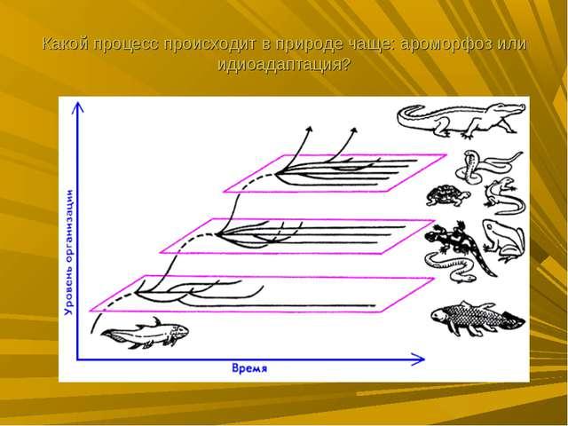 Какой процесс происходит в природе чаще: ароморфоз или идиоадаптация?