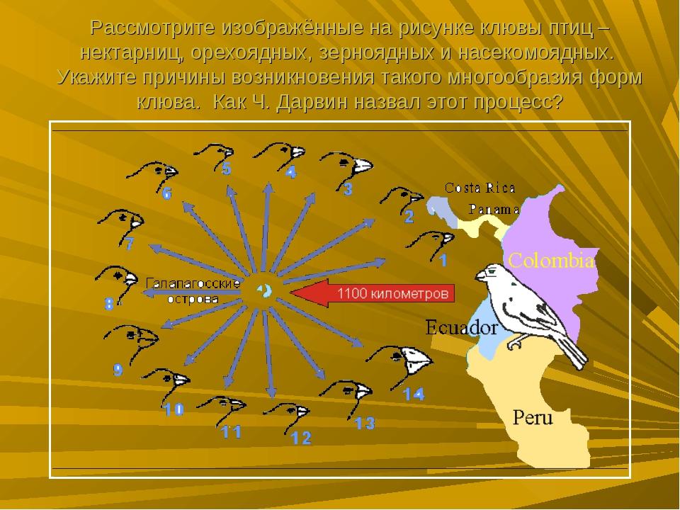 Рассмотрите изображённые на рисунке клювы птиц – нектарниц, орехоядных, зерно...