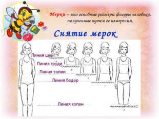 Снятие мерок Мерки – это основные размеры фигуры человека, полученные путем е