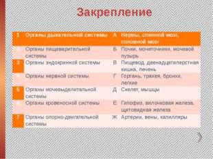 Закрепление 1 Органы дыхательной системы А Нервы, спинной мозг, головной мозг