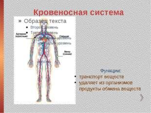 Кровеносная система Функции: транспорт веществ удаляет из организмов продукты