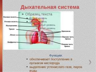 Дыхательная система Функции: обеспечивает поступление в организм кислорода вы