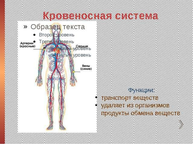 Кровеносная система Функции: транспорт веществ удаляет из организмов продукты...