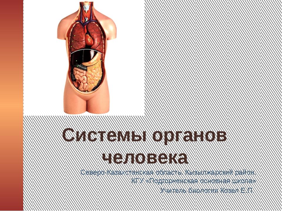 Системы органов человека Северо-Казахстанская область. Кызылжарский район. К...