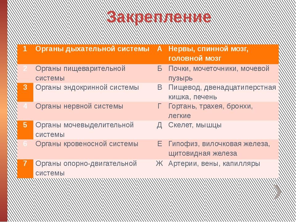 Закрепление 1 Органы дыхательной системы А Нервы, спинной мозг, головной мозг...