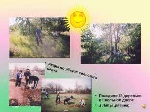 Посадили 12 деревьев в школьном дворе .( Липы ,рябина). Акция по уборке сель