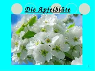 * Die Apfelblüte