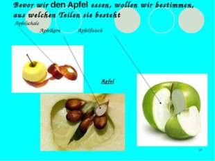 * Bevor wir den Apfel essen, wollen wir bestimmen, aus welchen Teilen sie bes