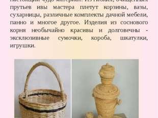 Плетение из лозы и корня сосны Ивовые прутья (лоза) и сосновый корень настоя