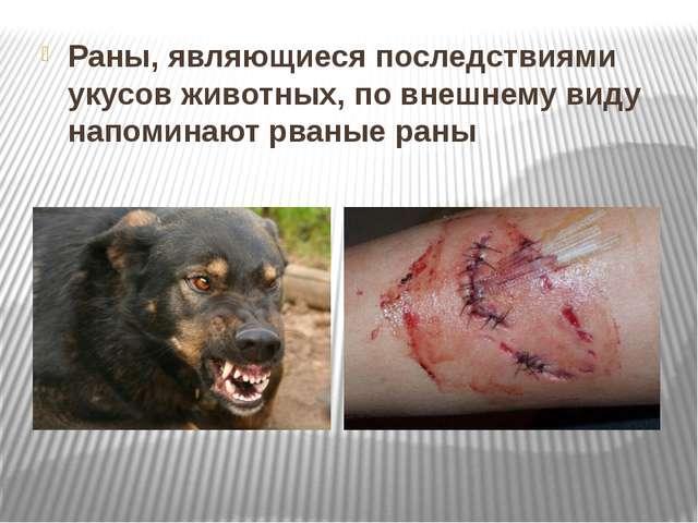 Раны, являющиеся последствиями укусов животных, по внешнему виду напоминают р...