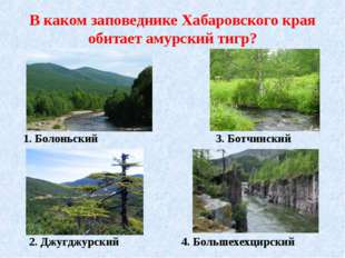 В каком заповеднике Хабаровского края обитает амурский тигр? 1. Болоньский 2.
