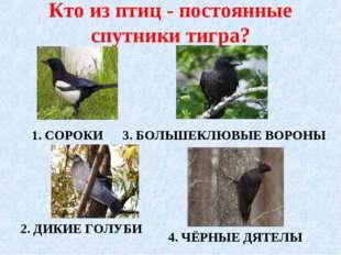 Кто из птиц - постоянные спутники тигра? 1. СОРОКИ 2. ДИКИЕ ГОЛУБИ 4. ЧЁРНЫЕ