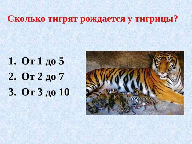 Сколько тигрят рождается у тигрицы? От 1 до 5 От 2 до 7 От 3 до 10