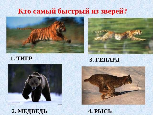 1. ТИГР 3. ГЕПАРД 2. МЕДВЕДЬ 4. РЫСЬ Кто самый быстрый из зверей?