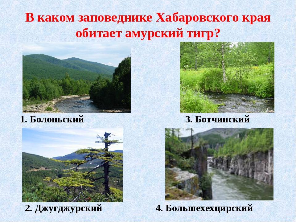 В каком заповеднике Хабаровского края обитает амурский тигр? 1. Болоньский 2....