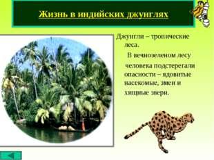 Джунгли – тропические леса. В вечнозеленом лесу человека подстерегали опаснос