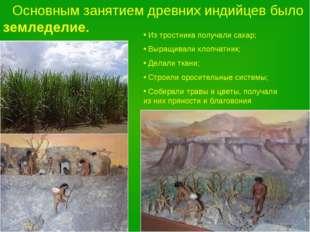 Основным занятием древних индийцев было земледелие. Из тростника получали са