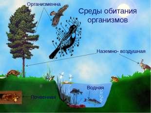 Среды обитания организмов Наземно- воздушная Водная Почвенная Организменная В