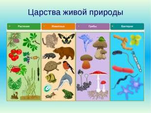 Царства живой природы Проверьте: представители каких царств есть на вашем ков