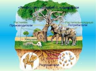 «Профессии» организмов, взаимосвязи Производители Потребители Разрушители Ра