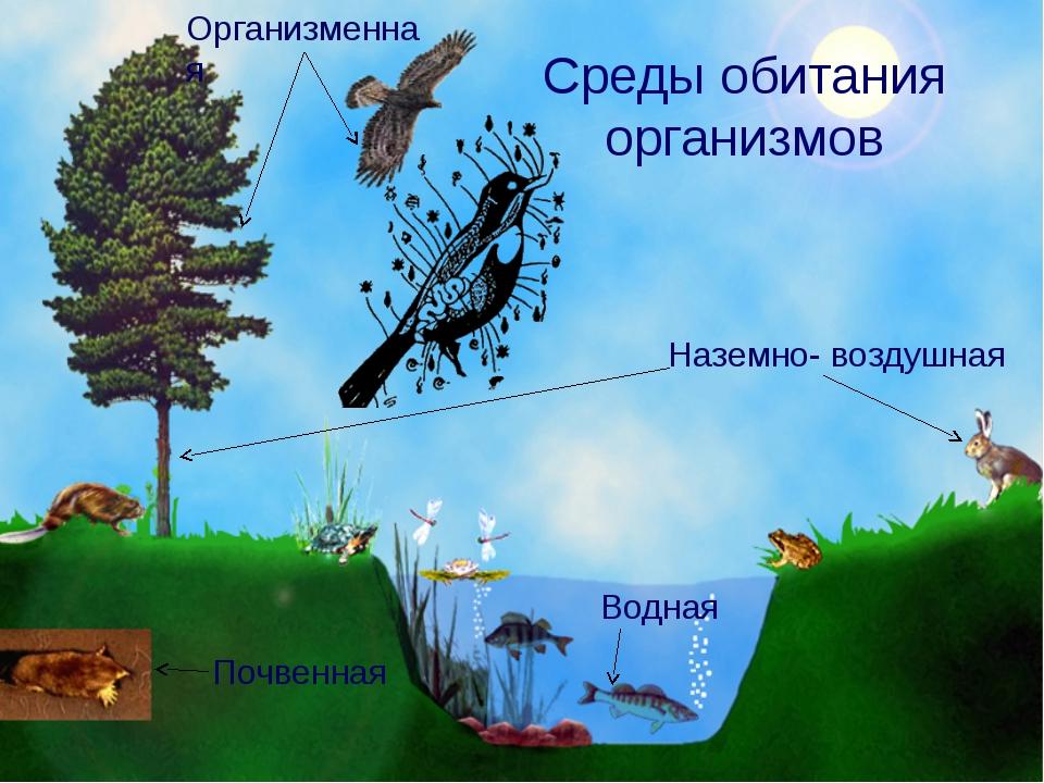 Среды обитания организмов Наземно- воздушная Водная Почвенная Организменная В...