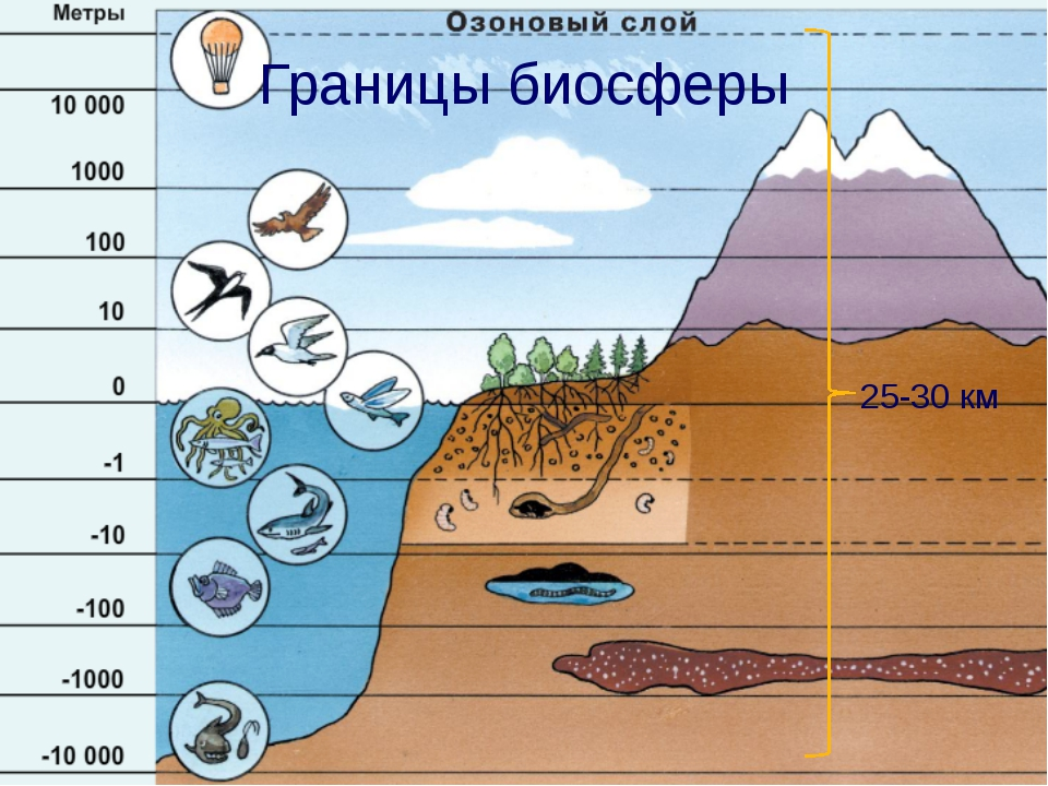 Границы биосферы 25-30 км Чтобы ответить на вопрос: «Смог ли Ной взять в ковч...