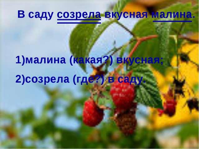 . В саду созрела вкусная малина. 1)малина (какая?) вкусная; 2)созрела (где?)...