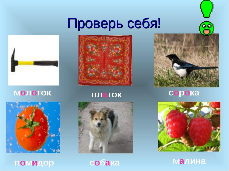 Проверь себя! молоток платок сорока помидор собака малина
