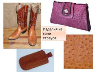 Изделия из кожи страуса http://t3.gstatic.com/images?q=tbn:ANd9GcSURH1ua-ffxt