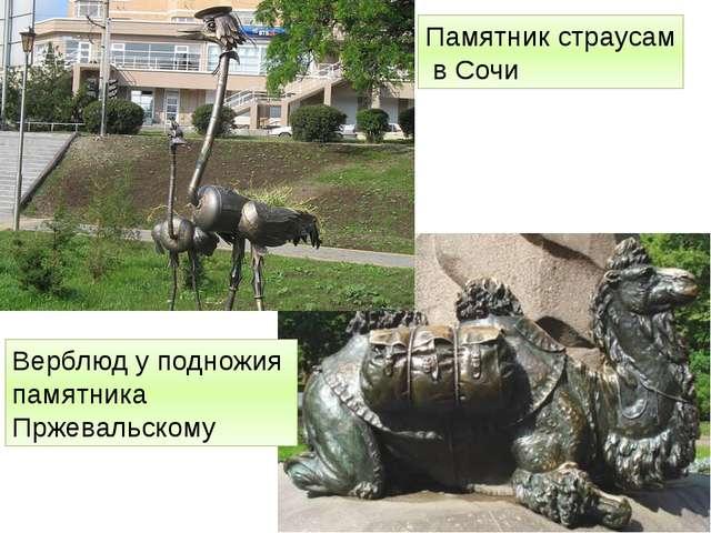 Памятник страусам в Сочи Верблюд у подножия памятника Пржевальскому http://fo...