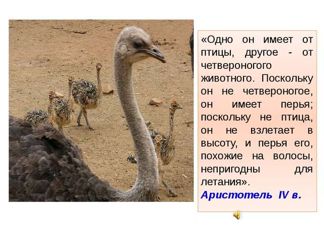 «Одно он имеет от птицы, другое - от четвероногого животного. Поскольку он не...
