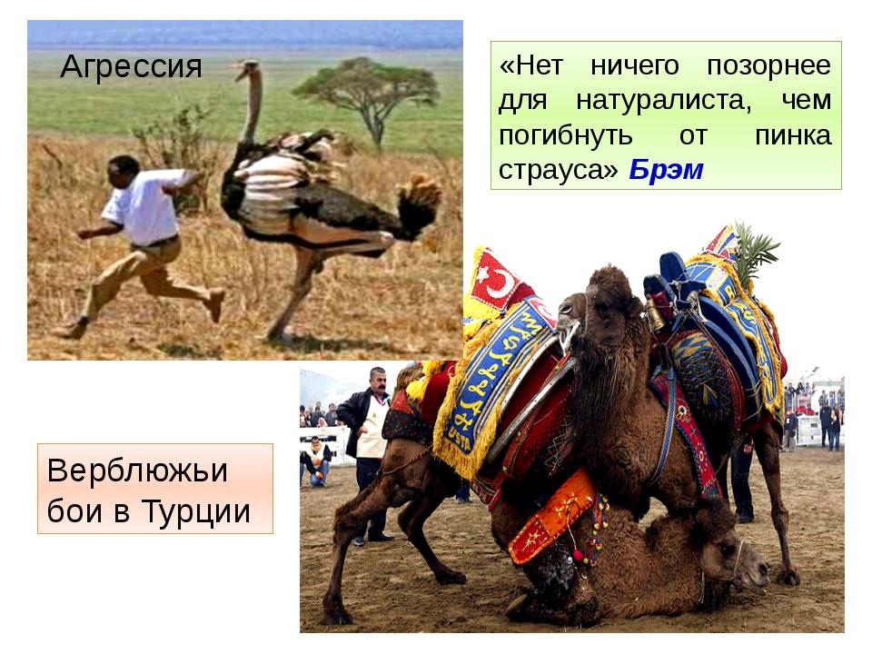 «Нет ничего позорнее для натуралиста, чем погибнуть от пинка страуса» Брэм Ве...