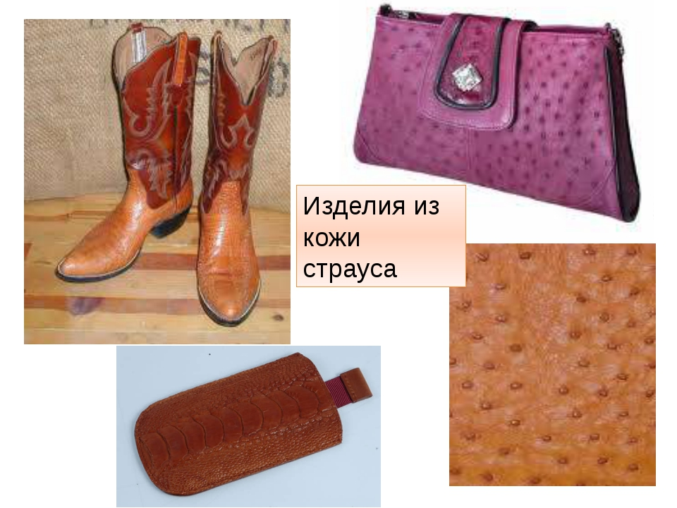 Изделия из кожи страуса http://t3.gstatic.com/images?q=tbn:ANd9GcSURH1ua-ffxt...