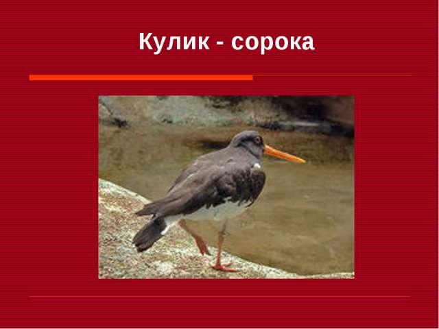 Кулик - сорока