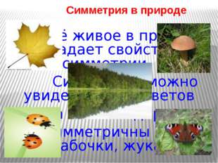 Симметрия в природе Всё живое в природе обладает свойством симметрии. Симмет