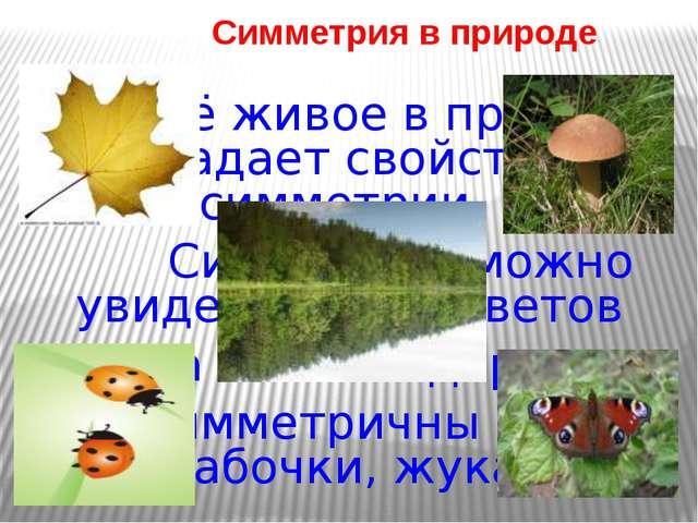 Симметрия в природе Всё живое в природе обладает свойством симметрии. Симмет...