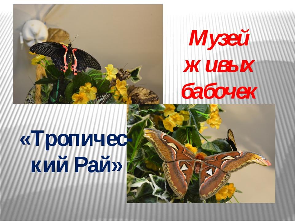 Музей живых бабочек «Тропичес-кий Рай»