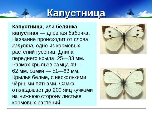 Капустница Капустница, или белянка капустная— дневная бабочка. Название прои...
