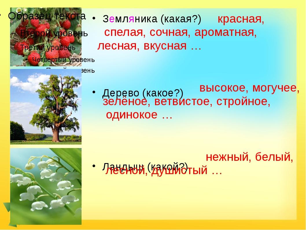 Земляника (какая?) Дерево (какое?) Ландыш (какой?) красная, спелая, сочная,...