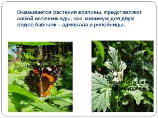 Оказывается растения крапивы, представляют собой источник еды, как минимум дл
