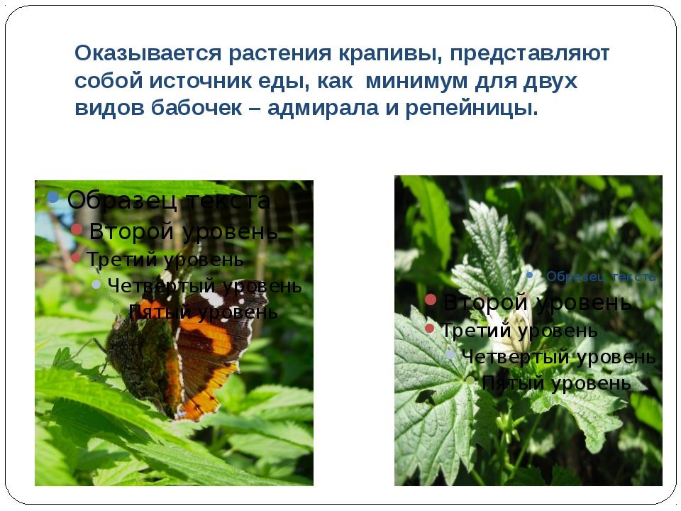 Оказывается растения крапивы, представляют собой источник еды, как минимум дл...