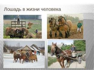 Лошадь в жизни человека Лошадь в сельском хозяйстве