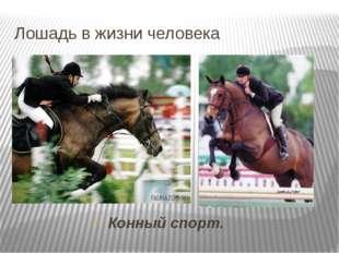 Лошадь в жизни человека Конный спорт.