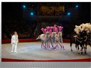 Лошадь в жизни человека Что за чудо цирк!