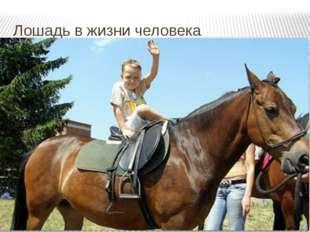 Лошадь в жизни человека Способность лечить людей.