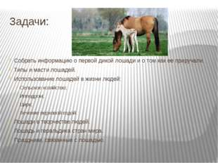 Задачи: Собрать информацию о первой дикой лошади и о том как ее приручали. Ти