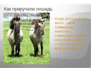 Как приручали лошадь Когда добычи было много, часть пойманных животных помеща