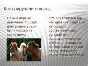 Как приручали лошадь Самые первые домашние лошади длительное время были похож