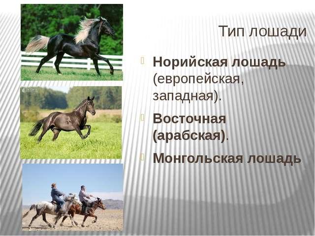 Тип лошади Норийская лошадь (европейская, западная). Восточная (арабская). Мо...